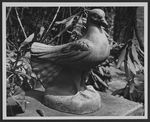 Pigeon, one of two